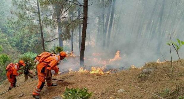 Maharashtra Forest fire